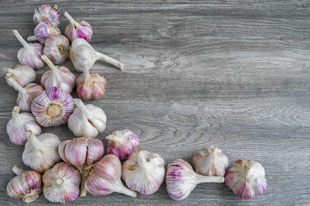 Colorful garlic bulbs on gray background. Organic food, harvest. Top view, copy space.