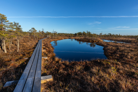 Raised bog boardwalk. Kemeri National park in Latvia. Summer. Фото со стока