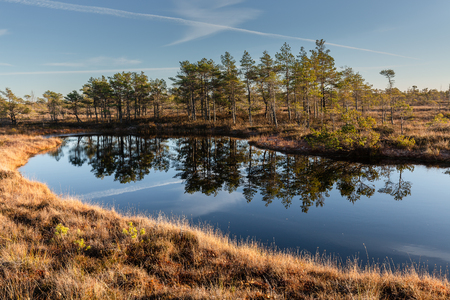 Raised bog. Kemeri National park in Latvia. View on lake with reflections. Summer. Фото со стока