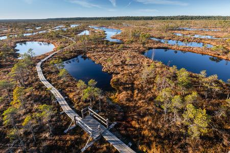 Boardwalk in raised bog. Latvia, Kemeri national park.