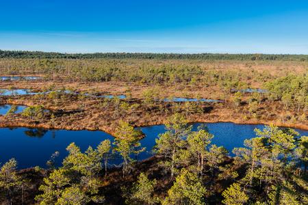 Aerial view on raised bog on sunny day. Kemeri National park in Latvia. Summer.