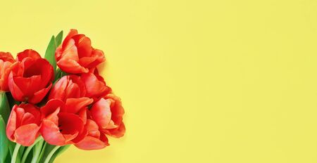 Bouquet of red tulips on a yellow background. Beautiful greeting card. Holidays concept. Copy space, top view. Banner