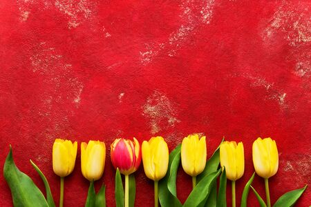 Yellow and red tulips on bright red background. Beautiful greeting card. Holidays concept. Copy space for text, top view