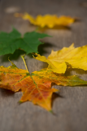 Autumn colored maple leaves on top of wooden surface. Vertical. Stock Photo - 22929010