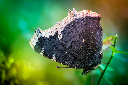 Macro shot of a butterfly sitting on a leaf in the forest on a bright and colorful background