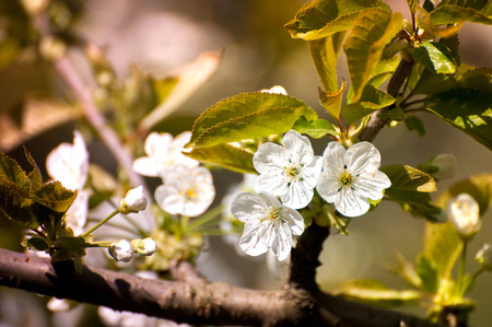 arbol de pascua: Spring time, animals, nature is awakening, birds are singing, flowers are starting to bloom. Fresh, aromatic air. Bees seeking nectar. Perfect time for outdoor activities, picnic, walks, gardening Foto de archivo