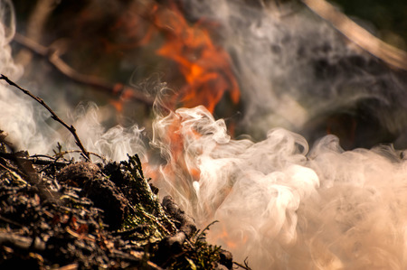 Ignite the fire. Macro shot of bonfire, white smoke, hot, glowing coal and fire. Burning branches and wood. Flames in fireplace, cozy home, warmth, love, romantic. Spring cleaning, gardening, picnic Stock Photo