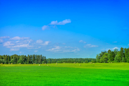 Summer scene of green meadow full of barley straw bales, next to forest with overcast sky and clouds on countryside. Rural, serene and calm landscape. Vacation, holidays far away from city life. Stock Photo