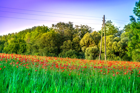 abstract, art, beautiful nature, botanical, countryside, current, danger, development, dreams, electricity, electricity bill, electricity cables, energy, fairy tale, flowers, global warming, green energy, healing, high voltage, high voltage power lines, h