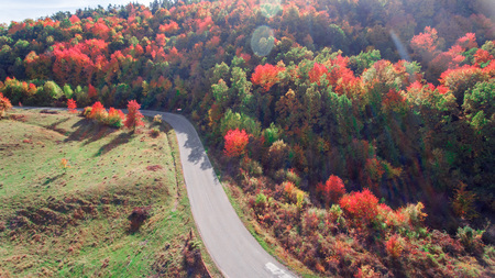 Autumn colored red leaves on trees in wood next to a highway in the mountains
