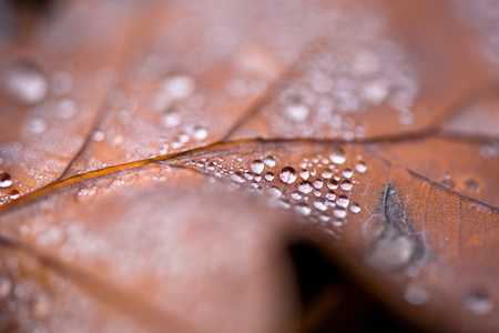 Glowing rain drops on dry, brown, fallen autumn leaves in the forest. Cold weather, winter is comming