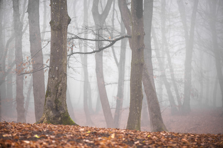 Thick fog in the dark mountain forest in late autumn. Cold waether, winter is comming. Scary woods Standard-Bild