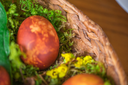Easter eggs decorated with natural fresh leaves and boiled in onions peels, laying in wicker basket full of grass and thuja branches. dyeing eggs in the morning and celebrating Easter with family 写真素材