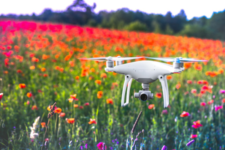 White quadrocopter, is flying high in the air, to take photos and record footage from above, in red poppy field. Drone with four motors, propellers, camera, warning lights. Romantic flowers background Banco de Imagens