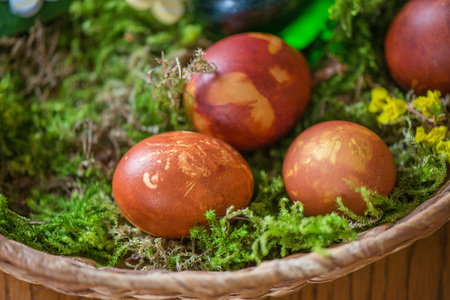 Easter eggs decorated with natural fresh leaves and boiled in onions peels, laying in wicker basket full of grass and thuja branches. dyeing eggs in the morning and celebrating Easter with family.