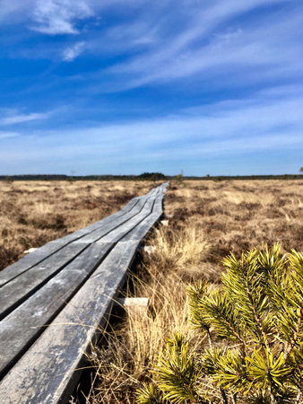Swamp hiking track on a natural wooden path. Concept of Active lifestyle.  Beautiful nature landscape in protected are of natural park. Dry grass all around Reklamní fotografie