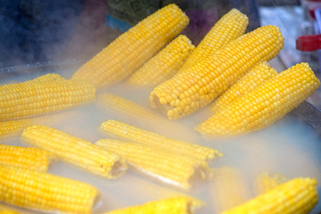 Big pot full of corn ears boiled for street food festival at a local state fair. Genetically modified corn prepared in a traditional way.