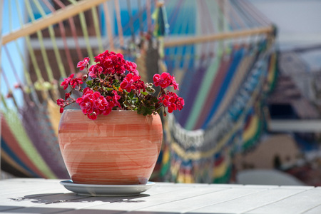 Beautiful, decorative clay flower pot standing on table on balcony or rooftop terrace at luxury penthouse apartment. Colorful hammock in background. Concept of relaxing, vacation, leisurely lifestyle Foto de archivo