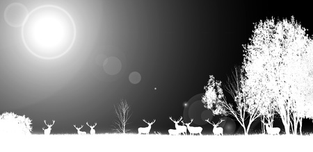 Invert effect, black and white photo. Beautiful young and adult mule red deer bucks herd with growing antlers in the meadow on dramatic sunset or sunrise background. Majestic animals in natural park