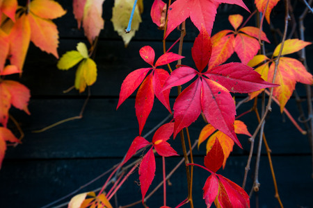 Beautiful background of colorful autumn leaves. Red, green, brown and yellow. Concept of changing seasons