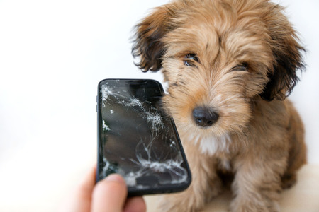 Broken and damaged smartphone with cracks on glass screen next to disobedient puppy. Accident. Dog has ruin and bitten the cell phone. Concept of warranty and lost smartphone