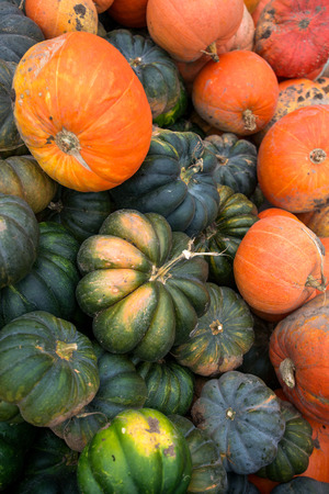 Trailer full of fresh pumpkins. Rich harvest in autumn or fall on farm in November. Beautiful, colorful autumn background. Preparing for Halloween. Delicious and healthy vegetables and fruits.