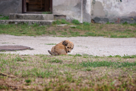 Little, lovely, fluffy, cute brown puppy is left alone on at home garden. Concept of abandoned domestic animals and pets. Curious, obedient dog. Concept of discovering the world, everything is new