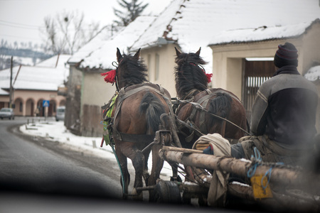 Traditional transylvanian horses are walking through Romanian village,  Concept of hard working animals. Man sitting in wooden cart pulled by two horses. Peasants on a horse-drawn carriage