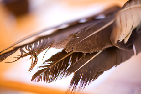 Feather pen in clay inkwell. Medieval, vintage, retro background.  writing with old quill pen on the old paper. Historical atmosphere. Writing calligraphy on reenactment festival in summer in Romania. 免版税图像