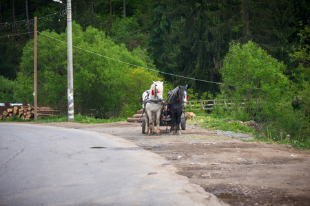 Concept of road trip. Traditional transylvanian horse walking on highway to Romanian village, shot from car. Woman sitting in wooden cart full of wood pulled by horses. Peasants on carriage