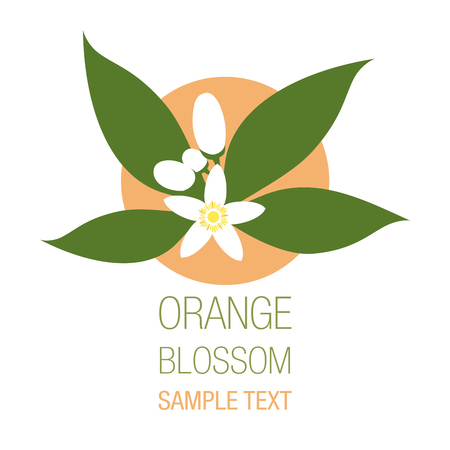 Orange blossom flowers with buds and leaves, isolated on white background.