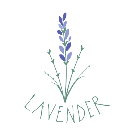 Lavender flower. Logo design. Text hand drawn. Banque d'images - 106124538