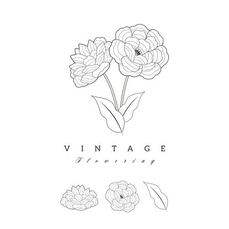 Stylized vintage retro flower. Natural style brand logo isolated on white background