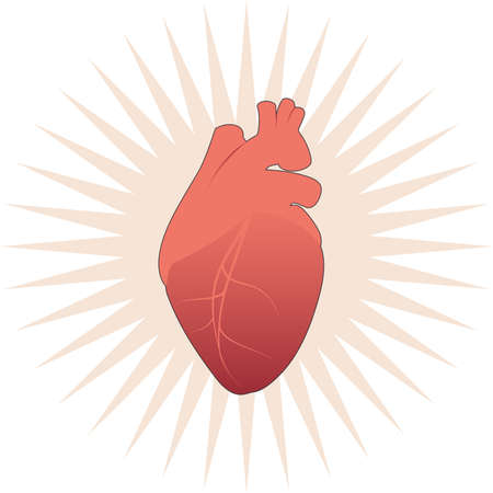 Illustration of realistic stylized human heart on star and white background