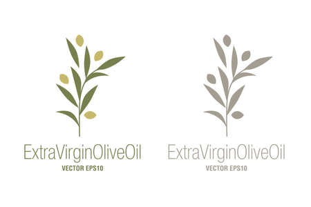 Olive branches food isolated on white background. Extra virgin olive oil symbol. Symbol of culture and Mediterranean.
