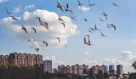 a flock of birds flies over the city