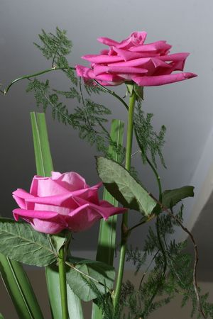 two roses in arrangement with green plants Stock Photo
