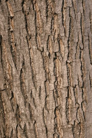 macro image of crisp on walnut tree