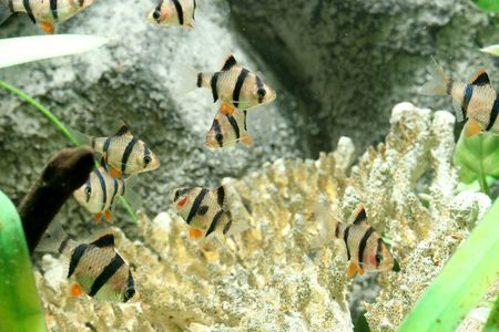 closeup underwater image of freshwater aquarium fish Stock Photo - 4119501