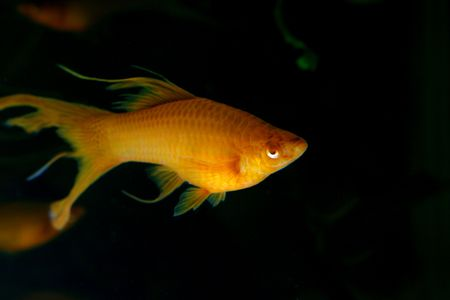 closeup image of nice freshwater aquarium girl