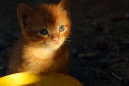 Blurry image of cute little ginger kitten sitting and looking to the camera, horizontal view. Animals day, pets, animals resque concept. Stray ginger kitten outdoors.