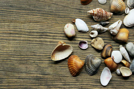 White and brown seashells on brown wooden background, top view. Travel, nature, vacation concept.