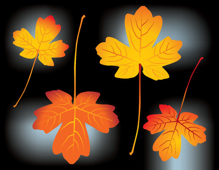 red and yellow autumn leaves - vector illustration Vector