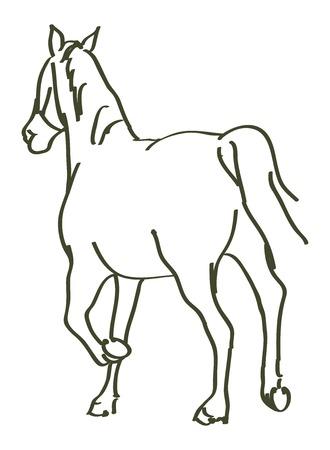 hand drawn horse - vector illustration