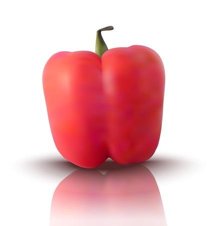 bell pepper: realistic red bell pepper - vector illustration