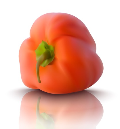bell pepper: realistic red bell pepper - vector illustration