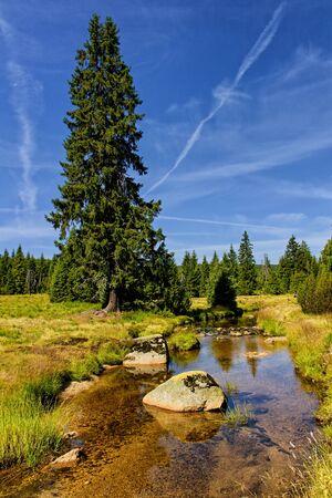 Jizera stream near Jizerka hamlet, Czech Republic. Crystal clear mountain creek, meadows, big confer tree and blue sky.