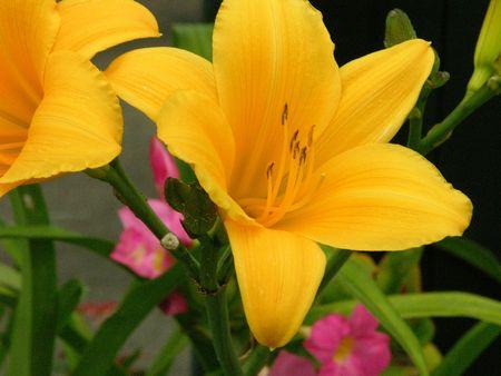 yellow flower Reklamní fotografie