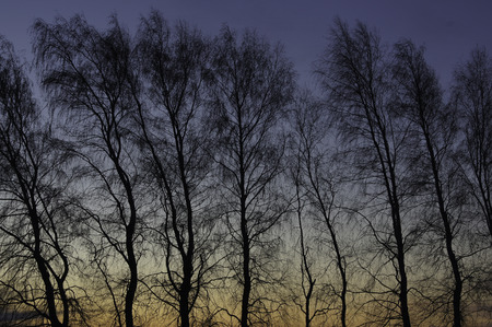 Trees naked of their leaves provide a silhouette of the dawn sky.