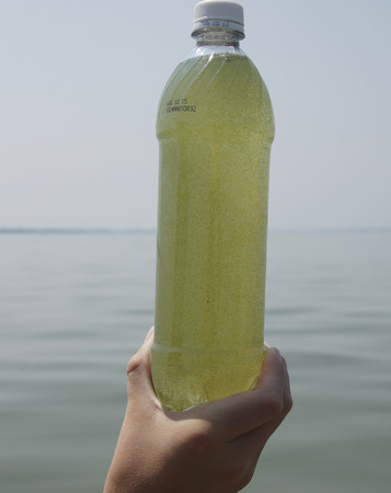 The water in this bottle contains millions of algae cells, from an algae bloom.  Most of them are blue-green algae.